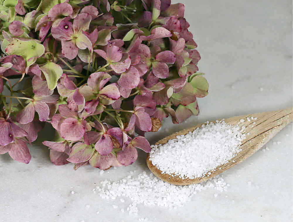 Spoonful of epsom salts with a hydrangea flower.