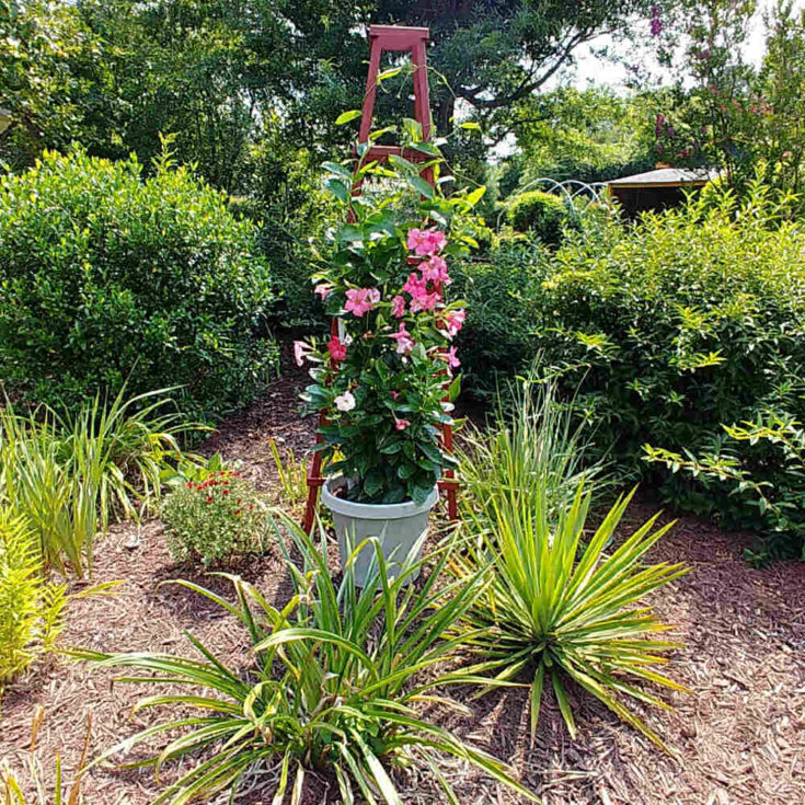 How to Build a Garden Obelisk Out of Wood
