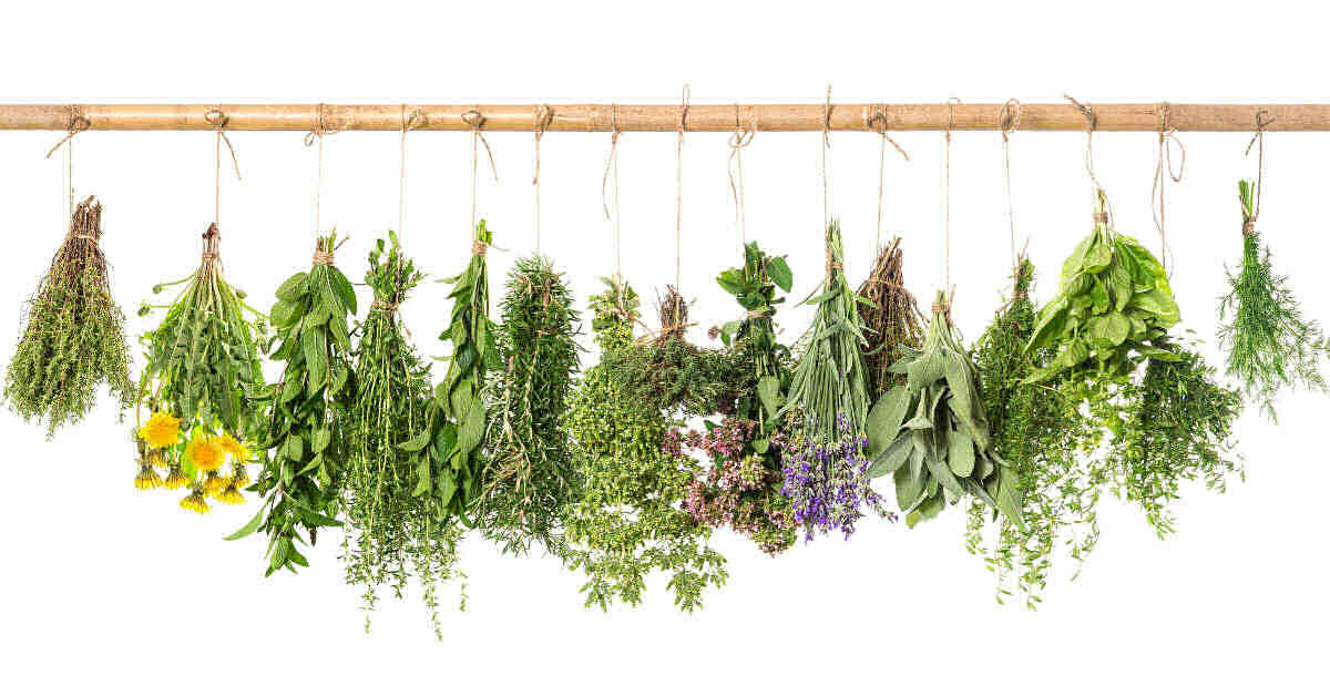 Row of fresh herbs tied to a long pole.