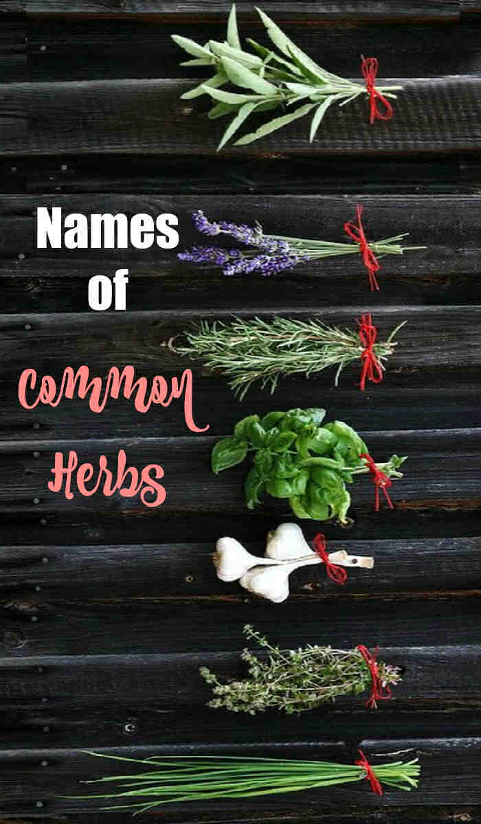 Tied herbs on a black background with words Names of Common herbs.