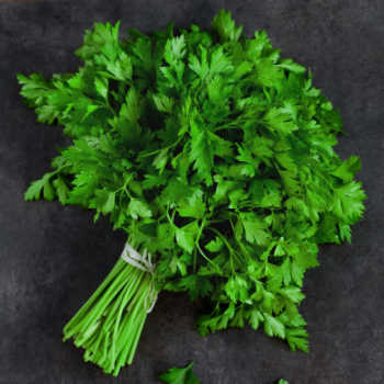 Parsley leaves tied in a bunch.
