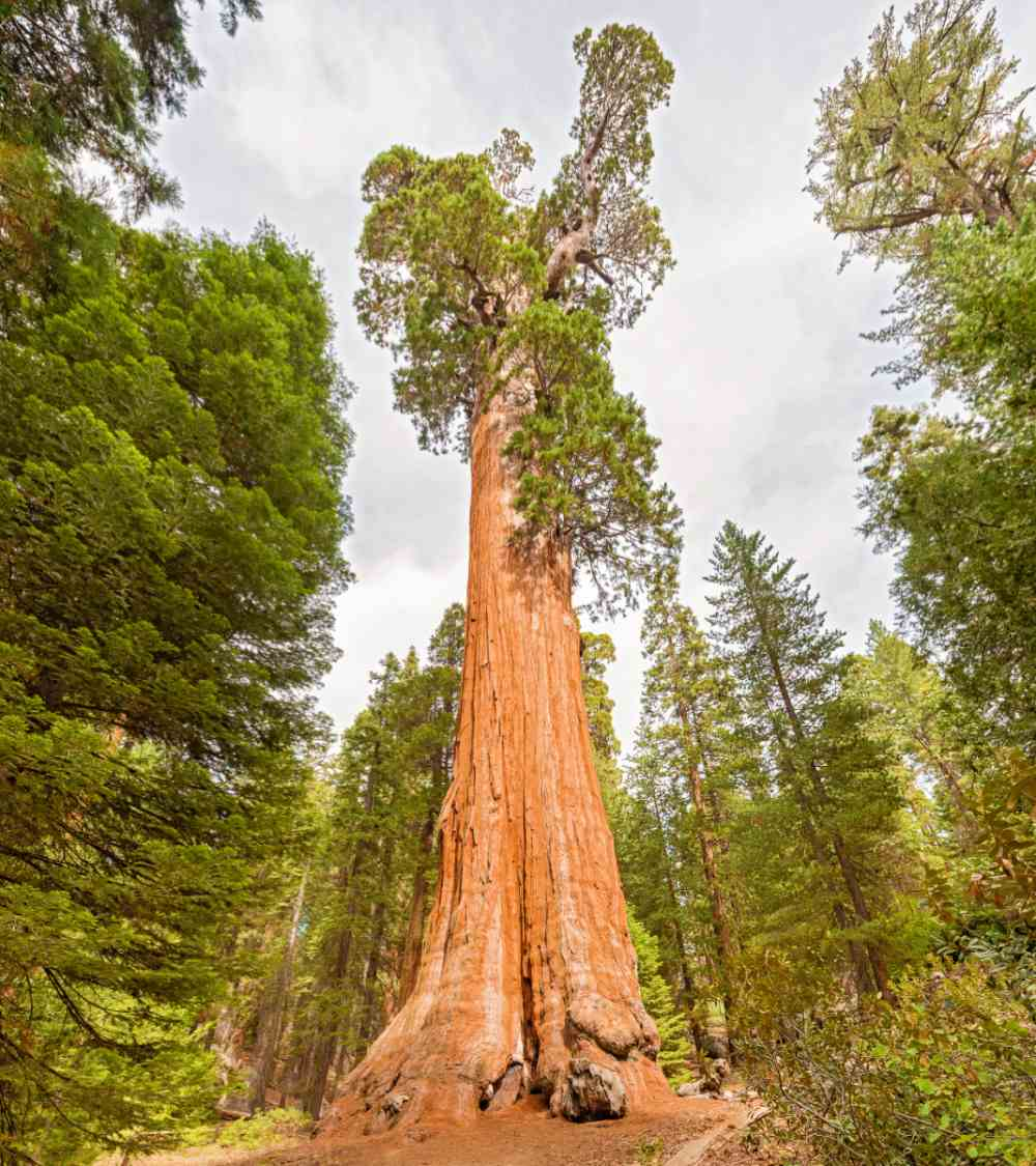 General Grant Tree in Kings Canyon National Park.