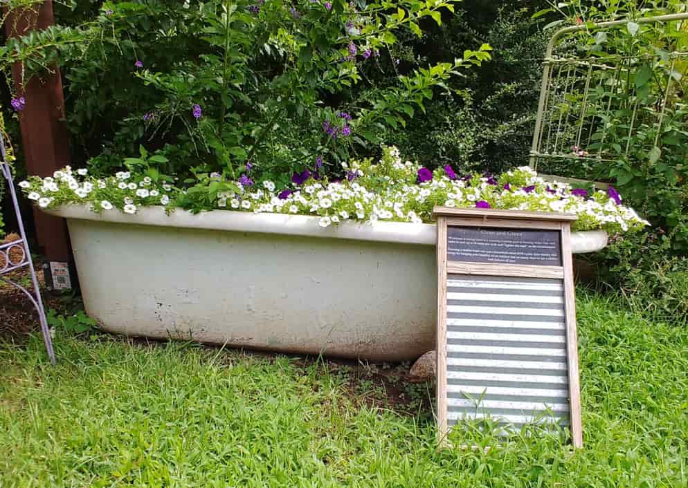 Plants growing in a bathtub at the Memphis Botanic Gardens.