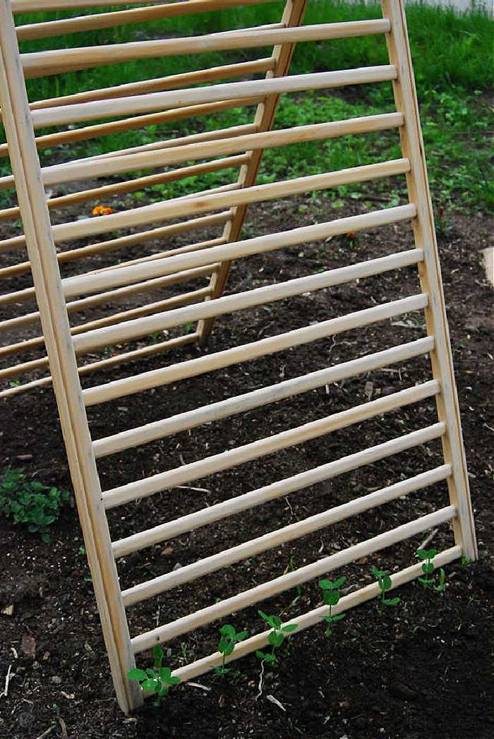 Cucumber trellis made from a cot frame.