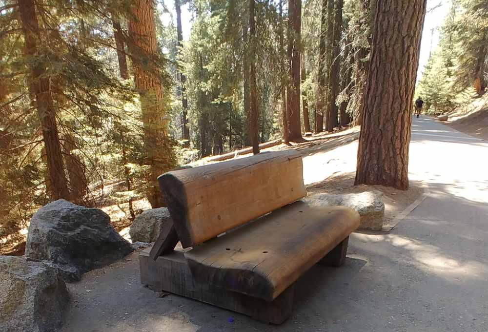 Huge bench in Sequoia National Park.