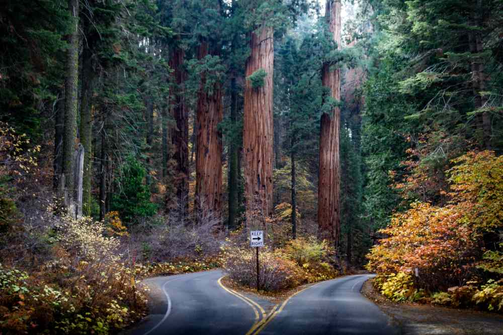 Road in Sequoia National Park in the fall.