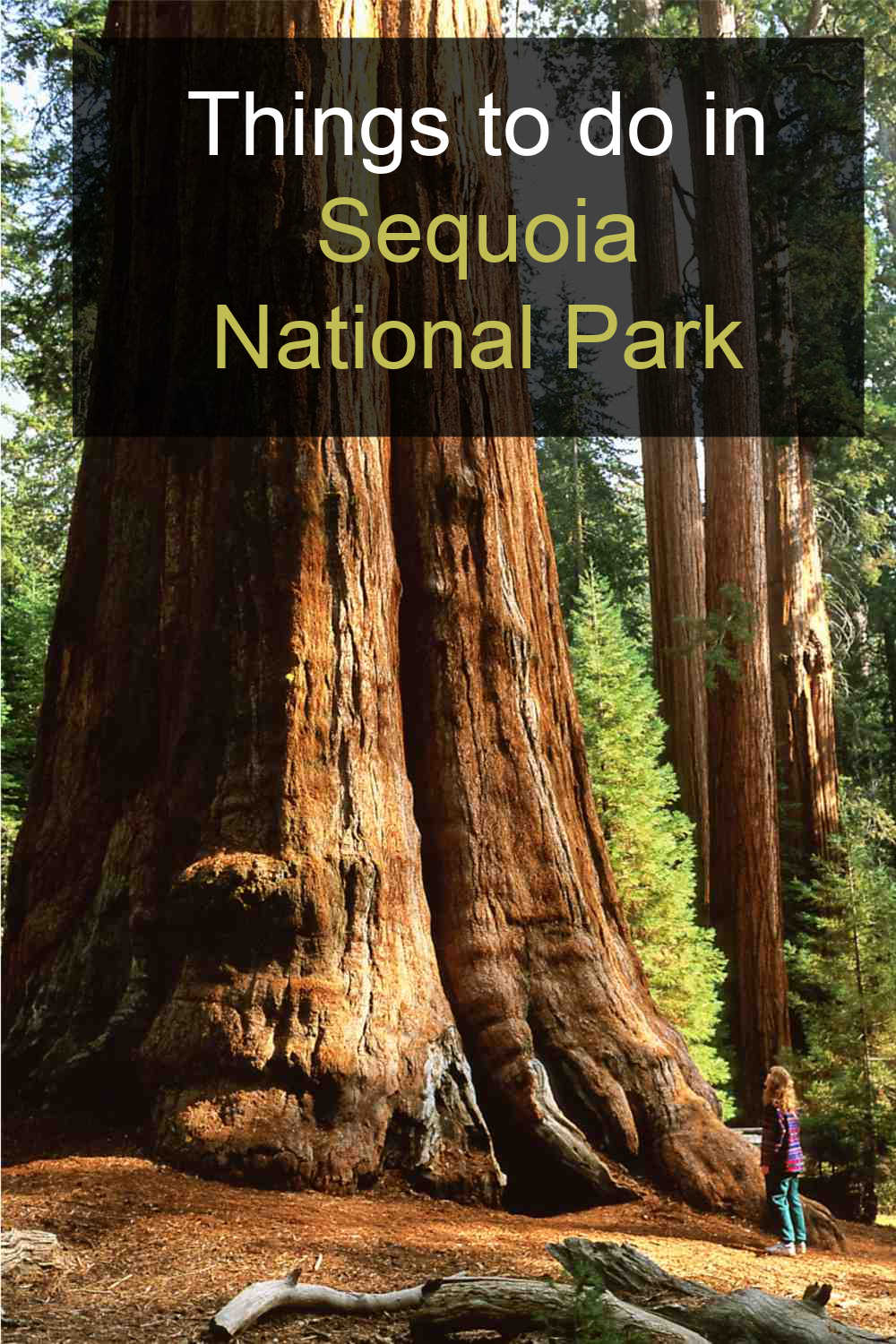General Sherman Tree and words reading Things to do in Sequoia National Park.