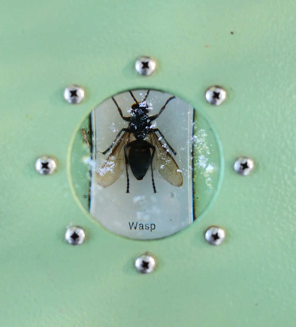 A bug magnifier with a wasp in it.