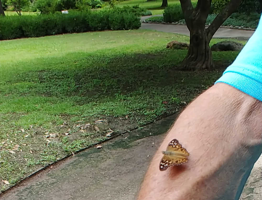 Butterfly sitting on a mans arm