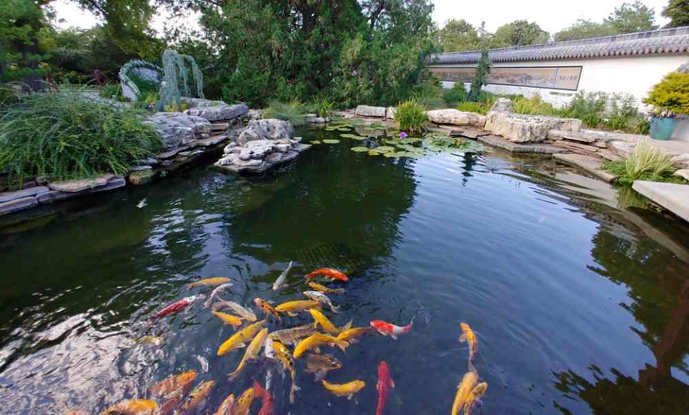 Koi pond at the Botanica the Wichita Gardens.