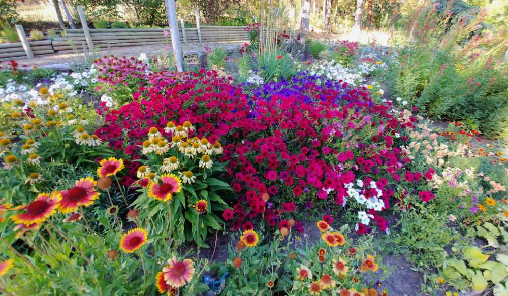 Garden bed full of annuals and perennials in bloom.