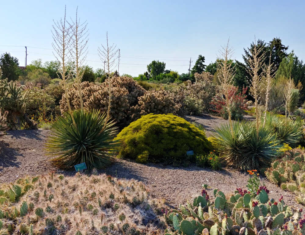 Garden bed at Orton Botanic Garden with drought tolerant and native plants.
