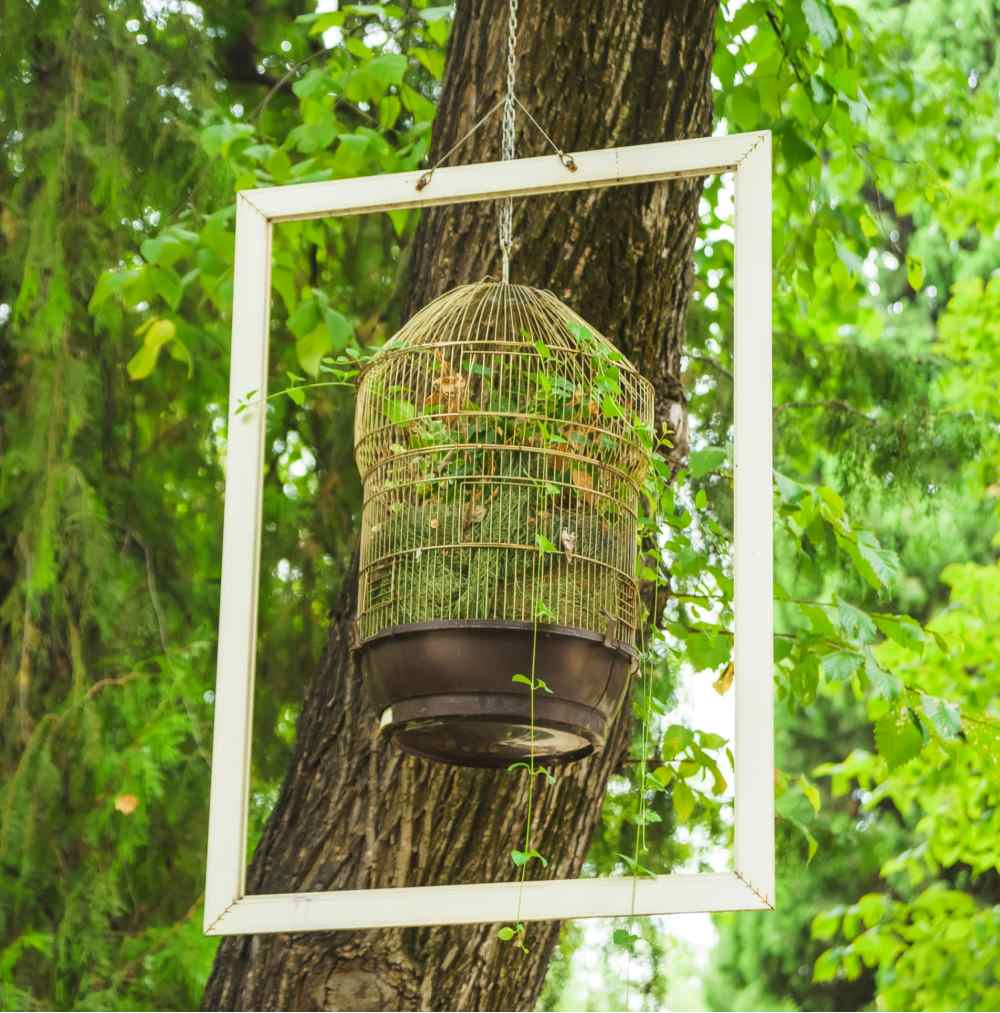 White picture frame hanging from a tree with a planted bird cage inside it.