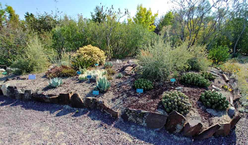 Cacti in a garden bed at Orton Botanic Garden in Idaho.