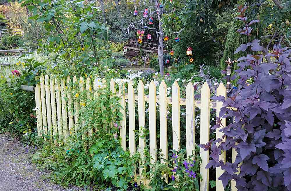 White picket fence with wildflowers behind it.