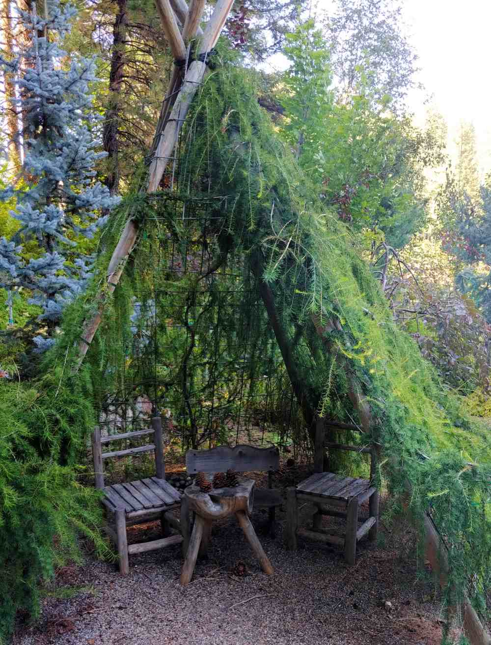 Wigwam made from living branches.