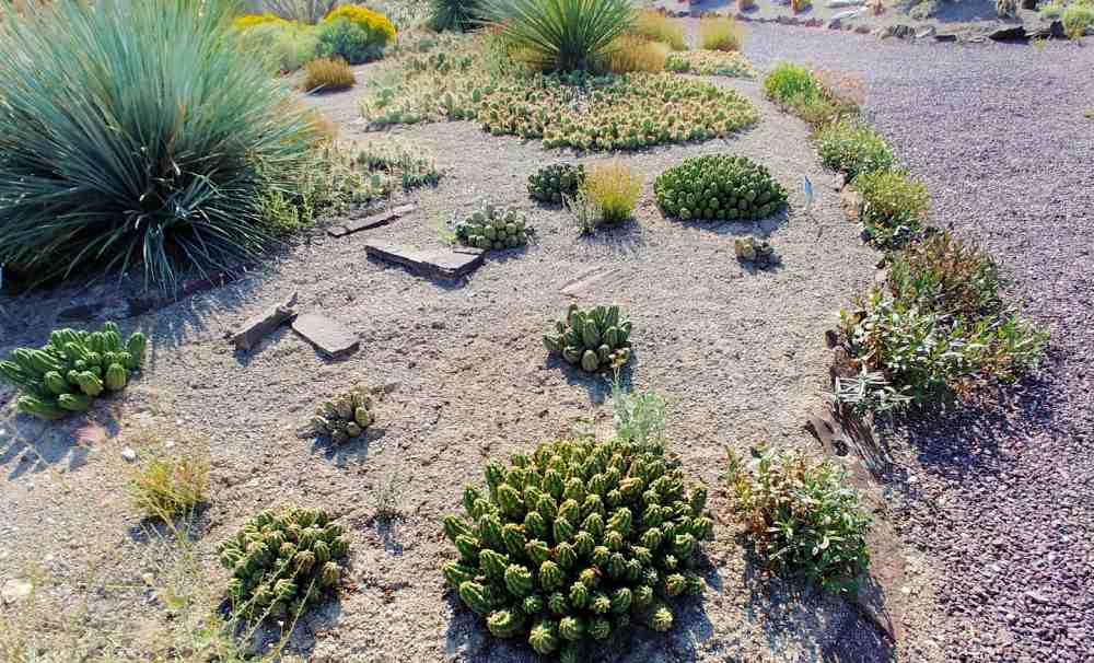 Cactus garden bed at Orton Botanic Garden in Idaho.