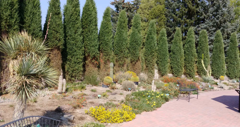 Row of trees behind a botanical garden bed.