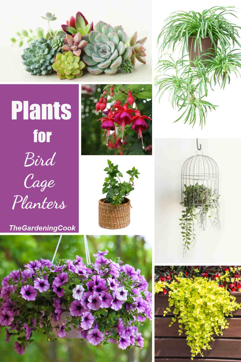 Plants in a collage with words Plants for bird cage planters.