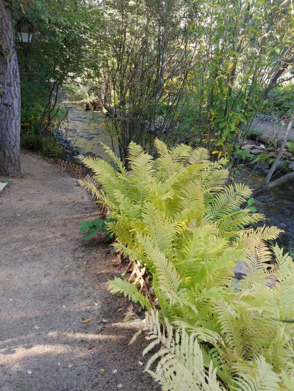Ferns growing around Prickly Pear Creek.