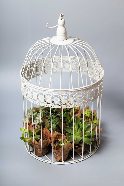 Mini succulent garden in a birdcage.