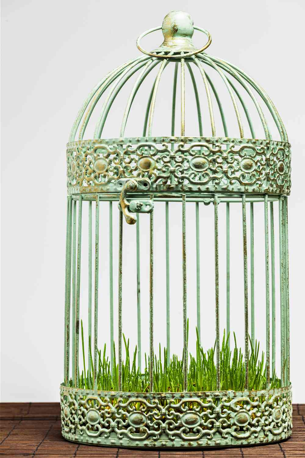 Bird cage planter with wheat grass.