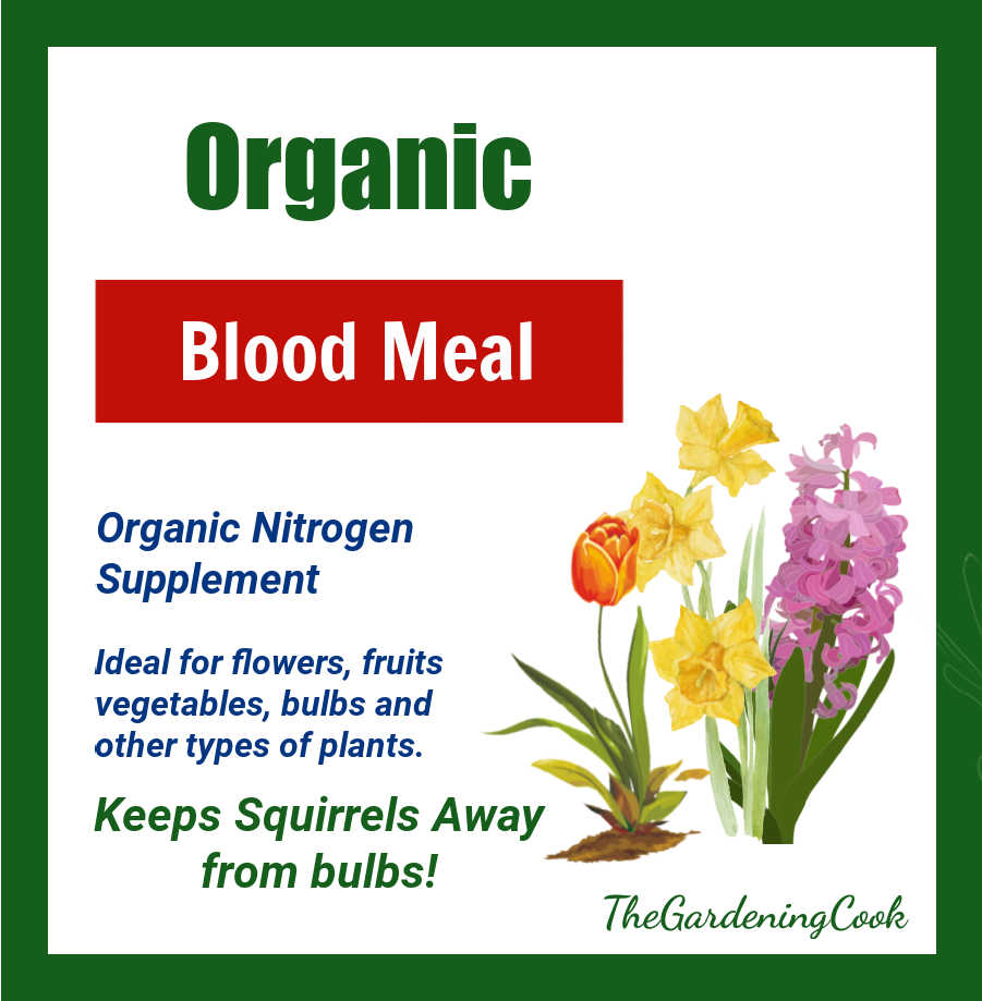 Graphic describing organic blood meal to keep squirrels away from bulbs.