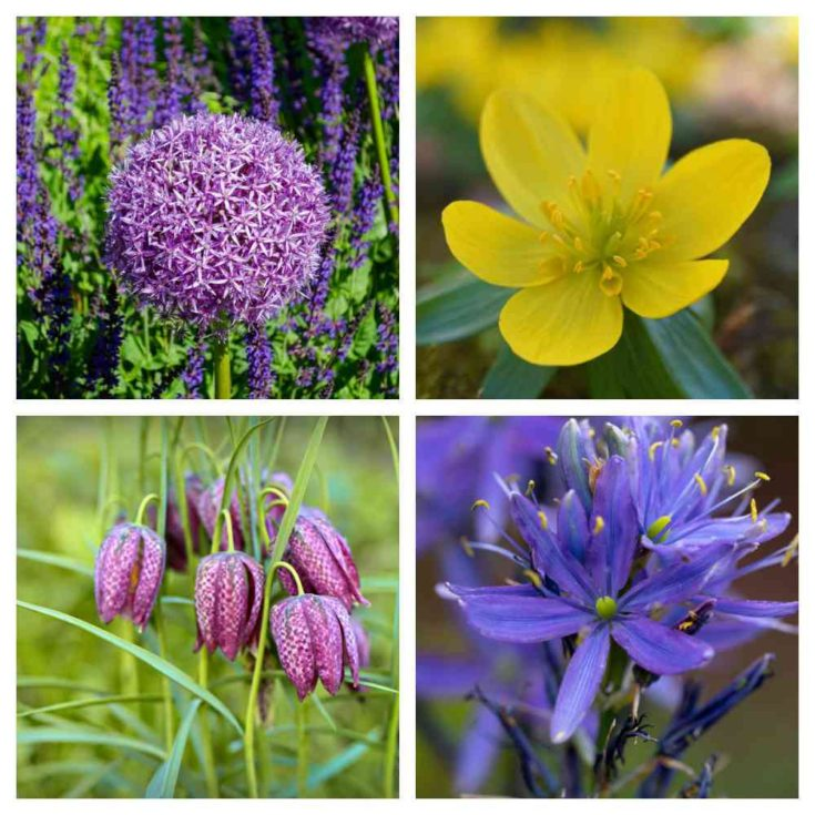 Shopping List for Squirrel Resistant Flower Bulbs
