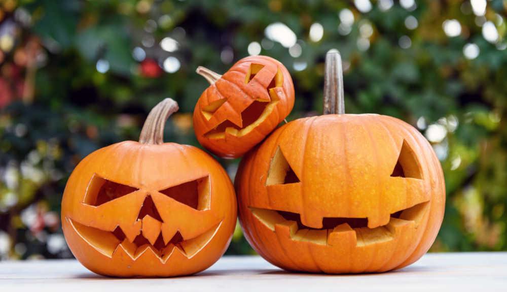 Three carved pumpkins.