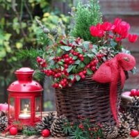 Scene with Christmas plants and a red lantern.