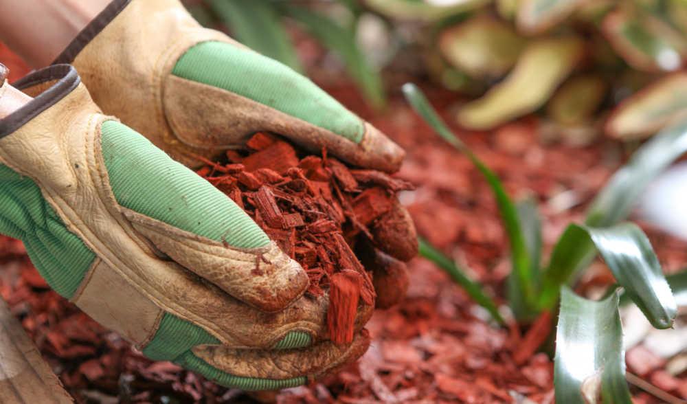 Hands in garden gloves covering soil with mulch.