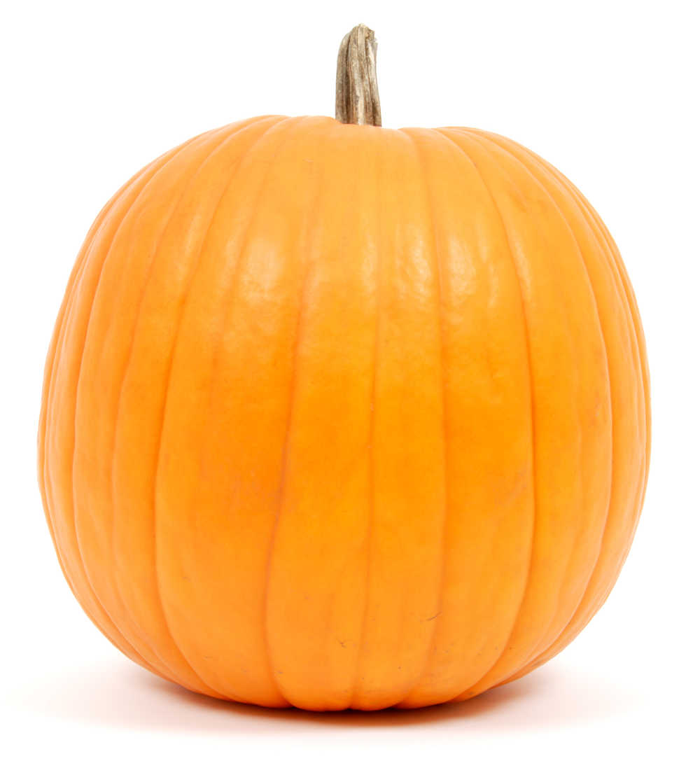 Large pumpkin on a white background