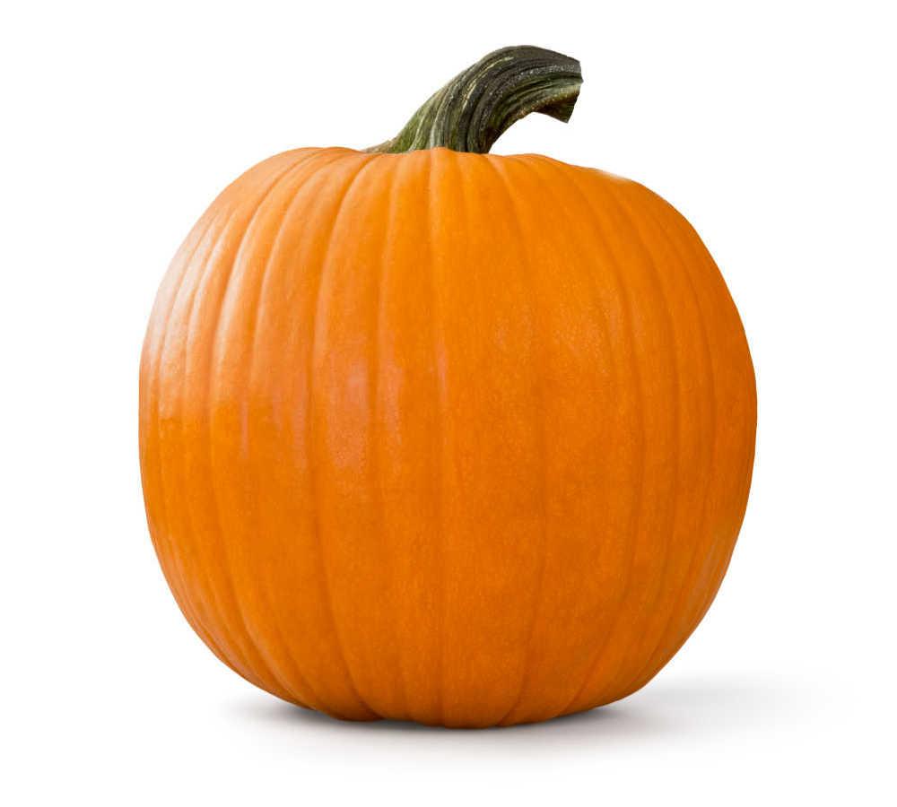 Medium sized pumpkin on a white background.