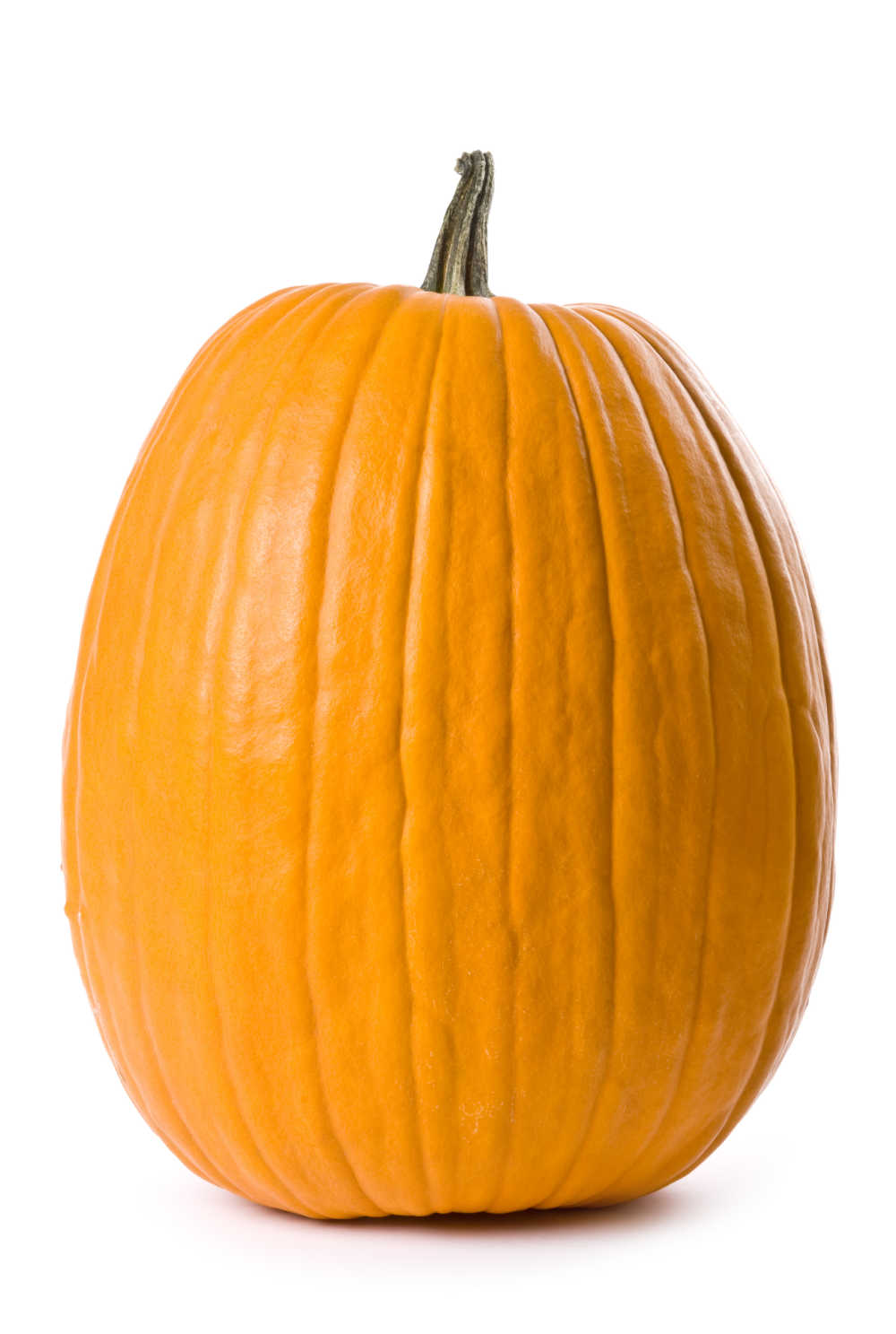 Tall, upright pumpkin on a white background.