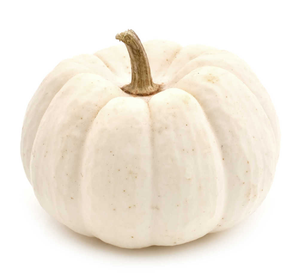 White pumpkin for carving on a white background.